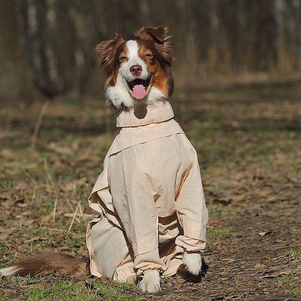 http://www.petsovet.ru/upload/medialibrary/2c3/IMG_5498-600.jpg