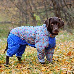 http://www.petsovet.ru/upload/medialibrary/3f6/IMG_3841-250.jpg