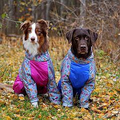http://www.petsovet.ru/upload/medialibrary/747/IMG_3818-600-241.jpg