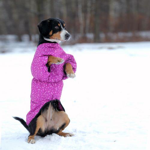 OSSO Fashion - лучшие товары для животных,дрессировки,спорта IMG_7976-600