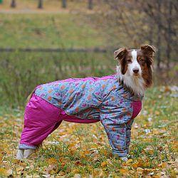 http://www.petsovet.ru/upload/medialibrary/b67/IMG_3827-250.jpg