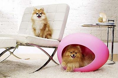 http://www.petsovet.ru/upload/medialibrary/e18/1.jpg