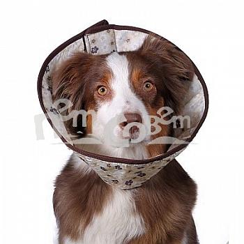 http://www.petsovet.ru/upload/resize_cache/iblock/c84/350_350_1/IMG_3018-400.jpg